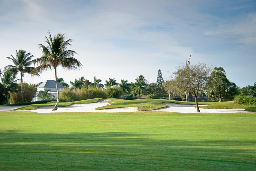 Big sand trap complete with palm tree on a Florida golf course. Horizontal, nobody.